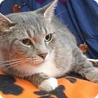 Adopt A Pet :: Mama Mia - Lloydminster, AB