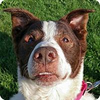 Adopt A Pet :: Lance - Lisbon, OH