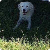 Adopt A Pet :: Avita - Willingboro, NJ