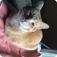 Adopt A Pet :: Oliver - Okotoks, AB
