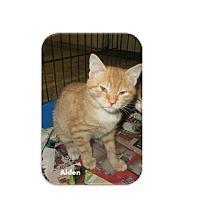 Adopt A Pet :: Aiden - Washington, DC