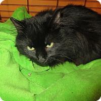 Adopt A Pet :: Elvira - Coos Bay, OR