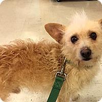 Adopt A Pet :: Skip - Logan, UT