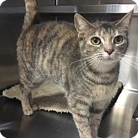 Adopt A Pet :: Nellie - Oakdale, CA