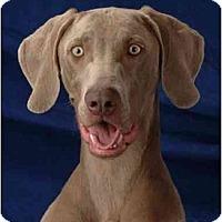 Adopt A Pet :: PAWNEE - Las Vegas, NV
