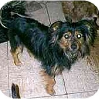Adopt A Pet :: William - dewey, AZ