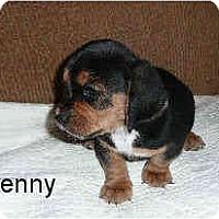Adopt A Pet :: Lenny - Phoenix, AZ