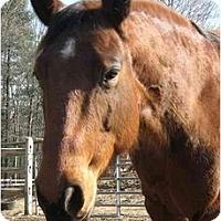Adopt A Pet :: Jody - Washington, CT