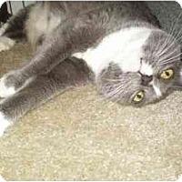 Adopt A Pet :: Sassie - Pasadena, CA