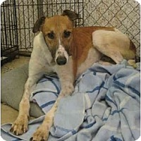 Adopt A Pet :: Hart (Smoke and Fire) - Chagrin Falls, OH