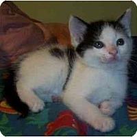 Adopt A Pet :: Smilie - Reston, VA