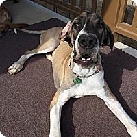 Adopt A Pet :: Tinkerbell - Mesa, AZ