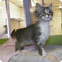 Adopt A Pet :: Zelda - Dover, OH