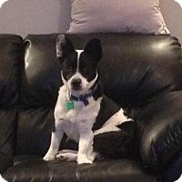 Adopt A Pet :: Bingo - Saskatoon, SK