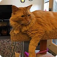 Adopt A Pet :: Sloane - San Ramon, CA