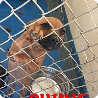 Adopt A Pet :: Divine - Waycross, GA