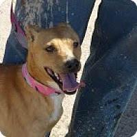 Adopt A Pet :: Haley - Perris, CA