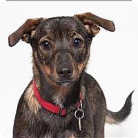 Adopt A Pet :: Jackman - San Luis Obispo, CA