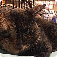 Adopt A Pet :: Minnie - Greensburg, PA
