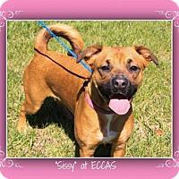 Adopt A Pet :: Sissy - Elizabethton, TN