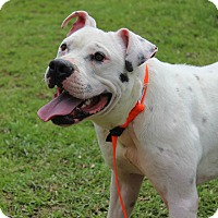 Adopt A Pet :: Hardy - Pawling, NY