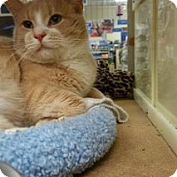 Adopt A Pet :: Caramel - Burlington, NC
