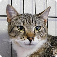 Adopt A Pet :: Tiger - Winston-Salem, NC