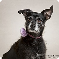 Adopt A Pet :: Rosie - Chandler, AZ