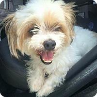 Adopt A Pet :: Wyatt - Fort Lauderdale, FL