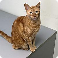 Adopt A Pet :: Benji - River Edge, NJ
