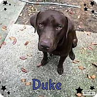 Adopt A Pet :: Duke - Rowlett, TX