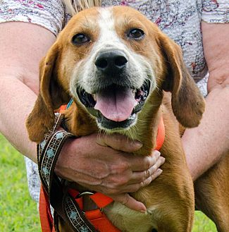 Hound (Unknown Type) Mix Dog for adoption in Midlothian, Virginia - Riley/Wiley