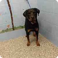Adopt A Pet :: URGENT on 12/13 SAN BERNARDINO - San Bernardino, CA