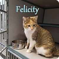Adopt A Pet :: Felicity - Knoxville, IA