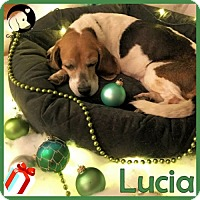 Adopt A Pet :: Lucia - Pittsburgh, PA