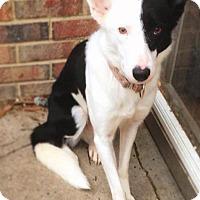 Adopt A Pet :: Penny - Richmond, VA