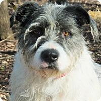 Adopt A Pet :: Josie - Lakeville, MN