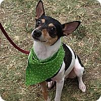 Adopt A Pet :: Silas - Mission Viejo, CA