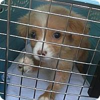 Adopt A Pet :: Patricia Wilder - Southampton, PA