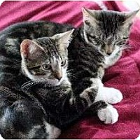 Adopt A Pet :: Brothers Michael & Marion - Chicago, IL