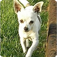 Adopt A Pet :: Paco - Meridian, ID