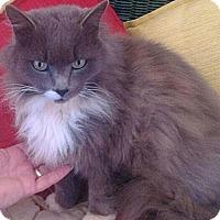 Adopt A Pet :: Babette - Harrisburg, NC