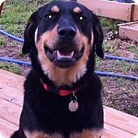 Adopt A Pet :: Bandit - Waller, TX