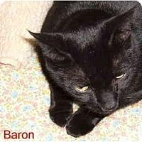 Adopt A Pet :: Baron - Albany, NY