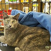 Adopt A Pet :: Eve - Sacramento, CA