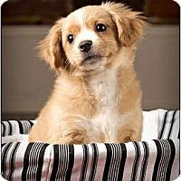 Adopt A Pet :: Randy - Owensboro, KY