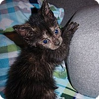 Adopt A Pet :: Violet - East Brunswick, NJ