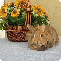 Adopt A Pet :: Lexi - Bonita, CA