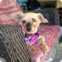 Adopt A Pet :: Lexie - North Port, FL