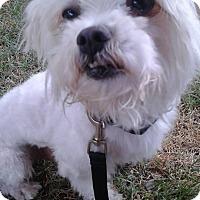 Adopt A Pet :: Winter - Las Vegas, NV
